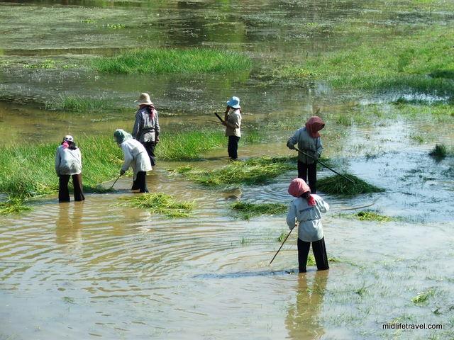 Farming? Fishing? Clearing the river? Angkor Wat, Cambodia